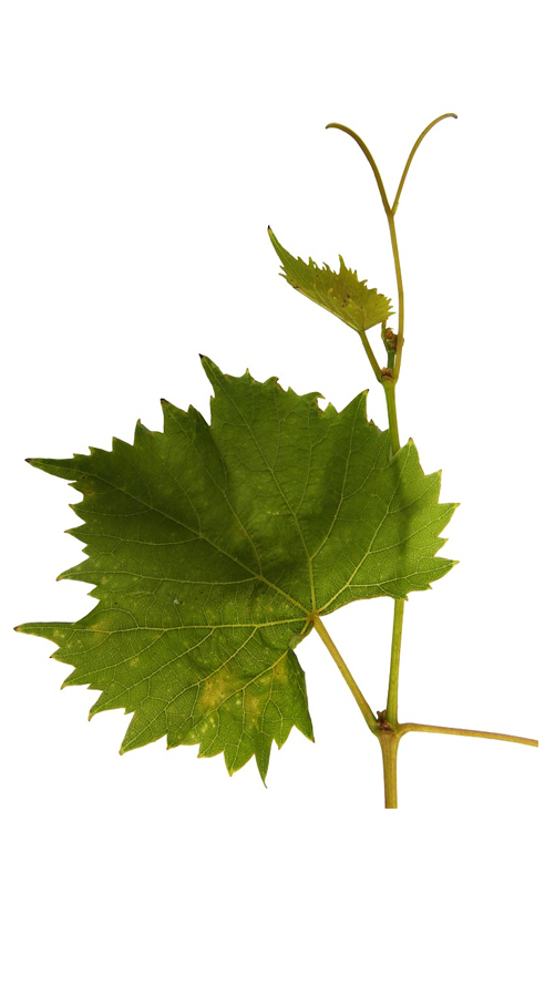 armor expo, organisation de foires & salons Vins, Gastronomie, Artisanat, Produits du terroir